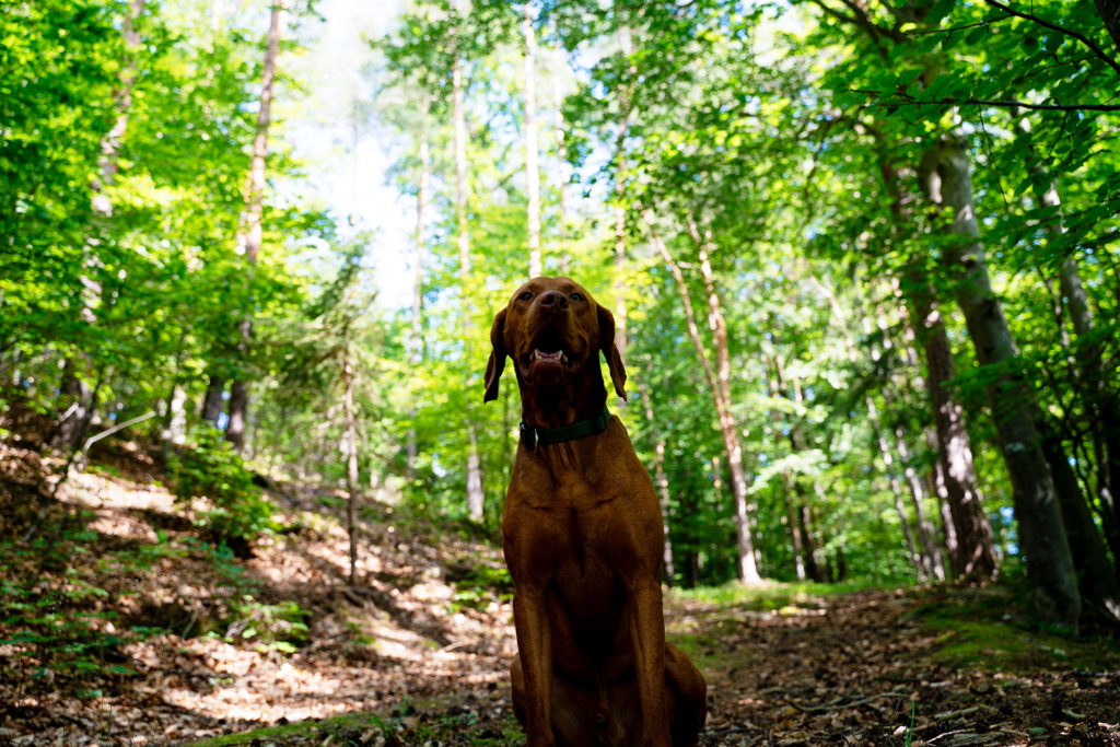 Ares im Wald
