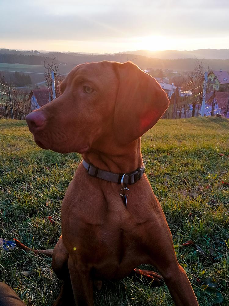 Ares im Sonnenuntergang