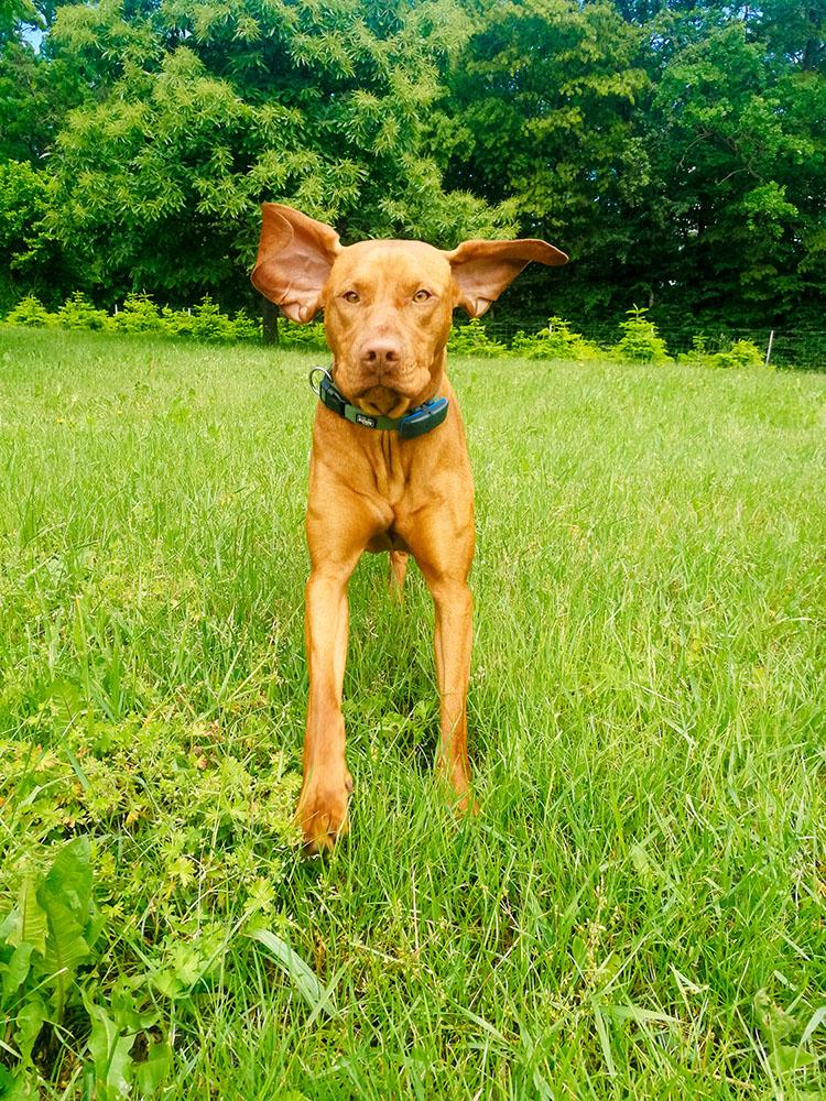Ares mit fliegenden Ohren